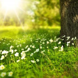 Photo of sun, grass, and flowers